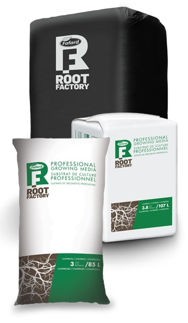 Root Factory cannabis